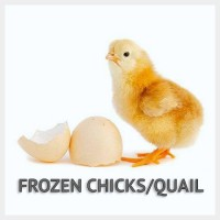Frozen Chicks/Quail