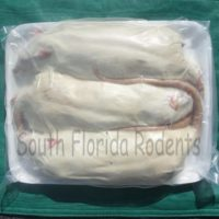 Frozen Colossal Rats
