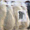 frozen jumbo rats