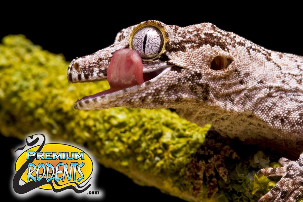 Reptile Food