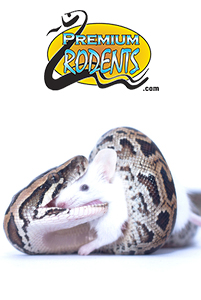 South Florida Rodents Frozen Snake Food