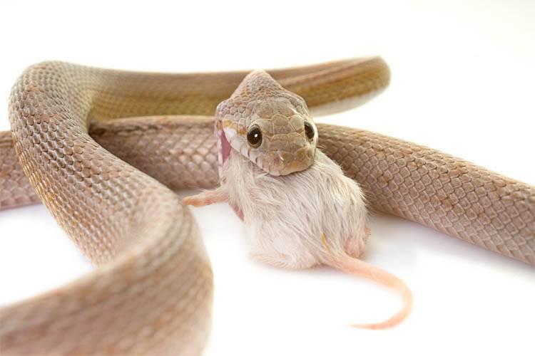 feeding your reptiles